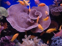 Collection\Beautiful Nature: Marine-Life-19