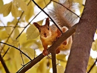 Collection\Beautiful Nature: Squirrel-in-tree-81