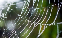 Collection\Msft\Insects: Spider-Web