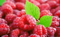 Collection\Msft\Plants\Agriculture: European-Raspberries