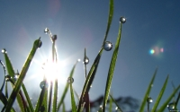 Collection\Msft\Plants: Morning-Dew