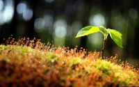 Collection\Msft\Plants: Moss-and-Sapling-