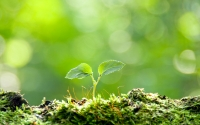 Collection\Msft\Plants: Sapling