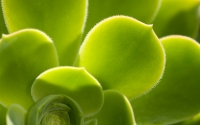 Collection\Msft\Plants: Succulent-2