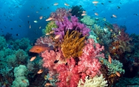 Collection\Msft\Sea: Coral-Reef-West-Papua-Indonesia