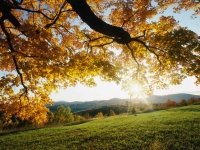 Collection\Msft\Seasons: Autumn-Leaves-over-meadow