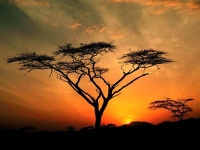 Collection\Nature Portraits: Africa-sunset
