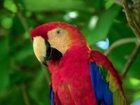 Collection\Nature Portraits: Red-parrot