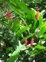 Rainforest: Flowers-of-the-rainforest-1