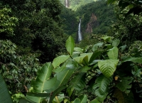 Rainforest: Rainforest-with-waterfall-1