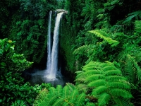 Rainforest: Waterfall-in-rainforest-1024-768