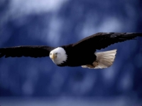 SeaLife: Sea-Eagle